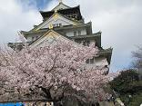 大阪城桜1(縮).JPG