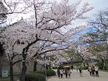大阪城桜2(縮).JPG